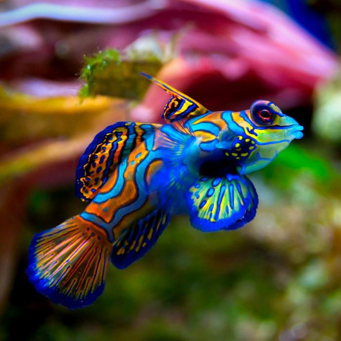 cibo per pesci di stagno