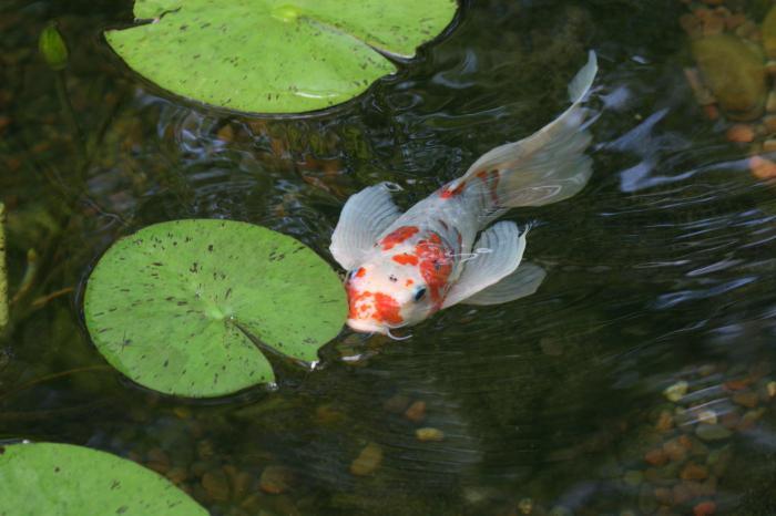 cibo per pesci vivi