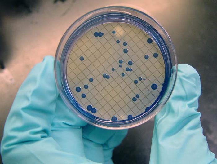 Е. coli лечение