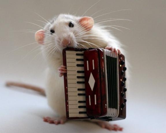 dell'anno secondo il calendario orientale: Rat