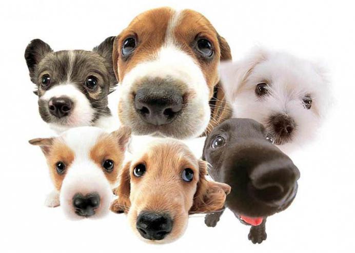 dell'anno secondo il calendario orientale: cane