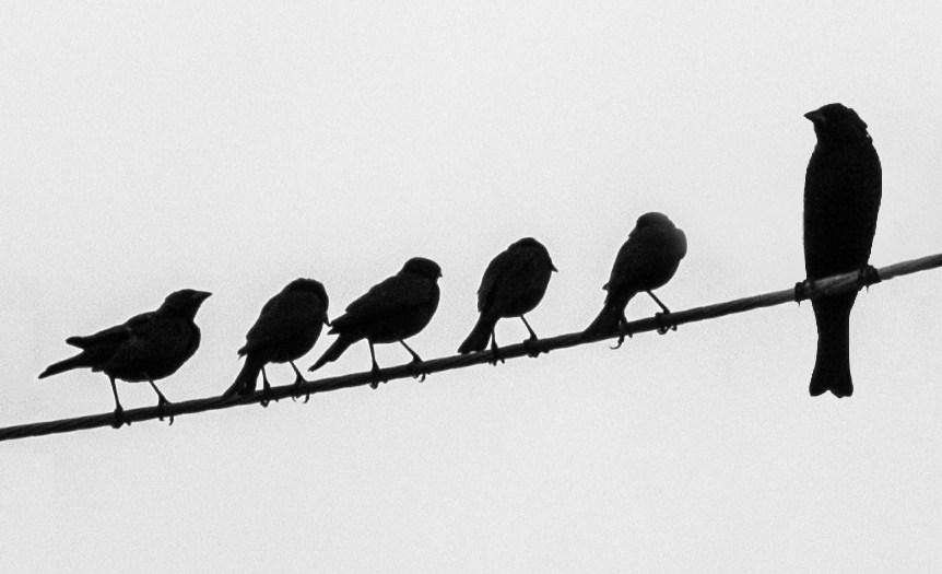 ptaki nie są porażeniami elektrycznymi