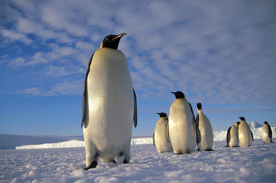 Insediamento pinguino