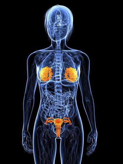 perturbazione endocrina