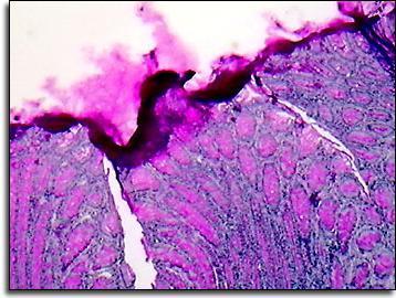 funkcije epitelnog tkiva