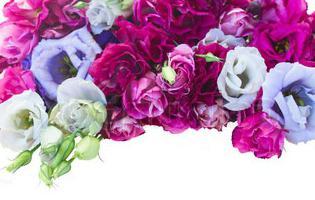 cvijeće eustoma