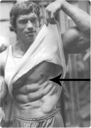 muscoli dell'ingranaggio
