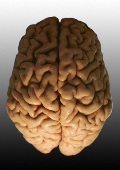 људски мозак