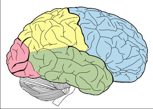 на граници могућег људског мозга