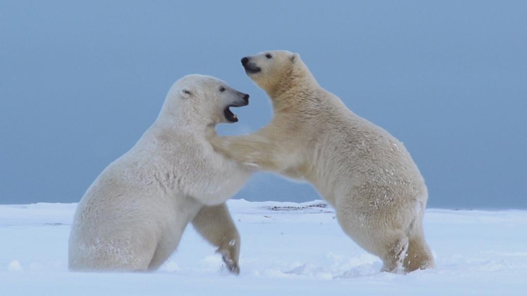 Животни от Холарктика