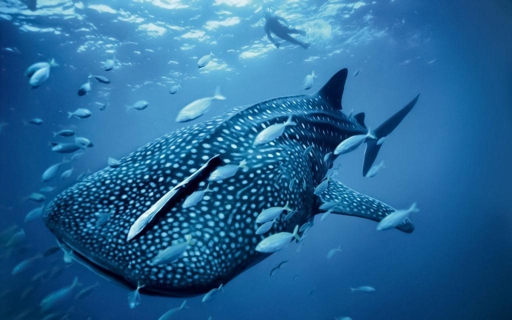 Морска фауна