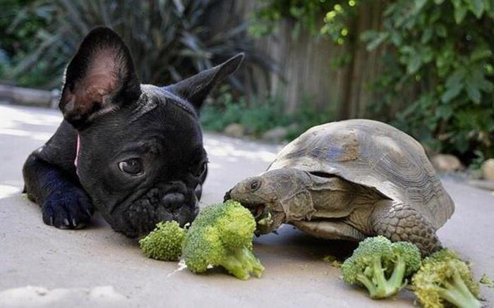 come nutrire una tartaruga