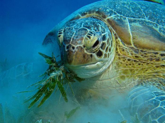 cibo per tartarughe d'acqua