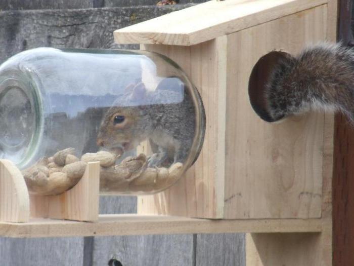 karmnik wiewiórki