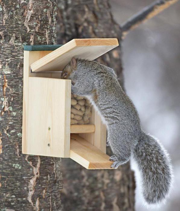 karmnik wiewiórczy własnymi rękami