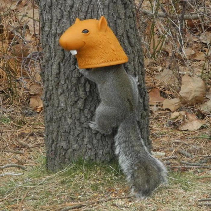 karmniki dla wiewiórek robią to sam zdjęcie