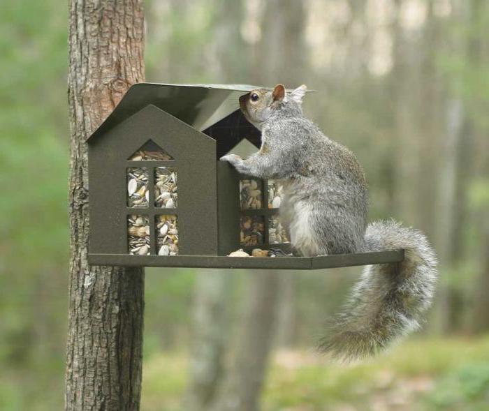 jak zrobić wiewiórkę