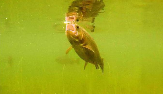 pesca in rakovo recensioni