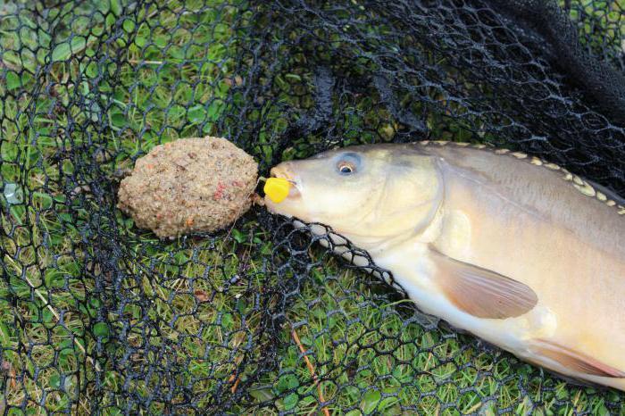 Pesca alla carpa sul capezzolo