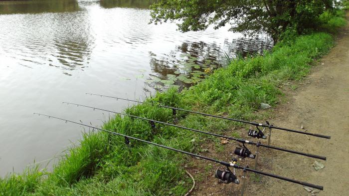 Доња опрема за риболов шарана