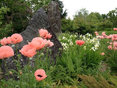 Što znači cvijet maka