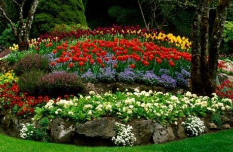 kwiaty na klomby bezpretensjonalne
