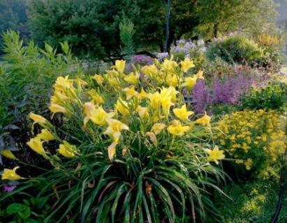 jakie kwiaty sadzić w klombie
