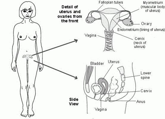 повећан прогестерон у фоликуларној фази