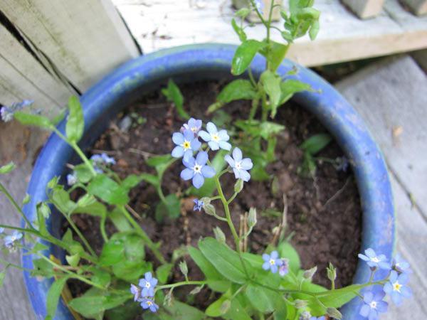 Niezapomniane zdjęcia kwiatów
