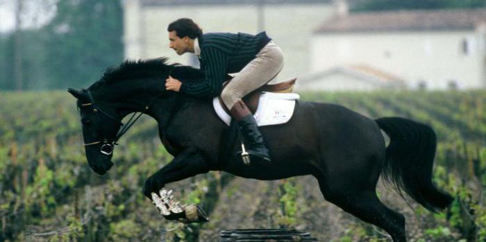 списък с филми за конна езда