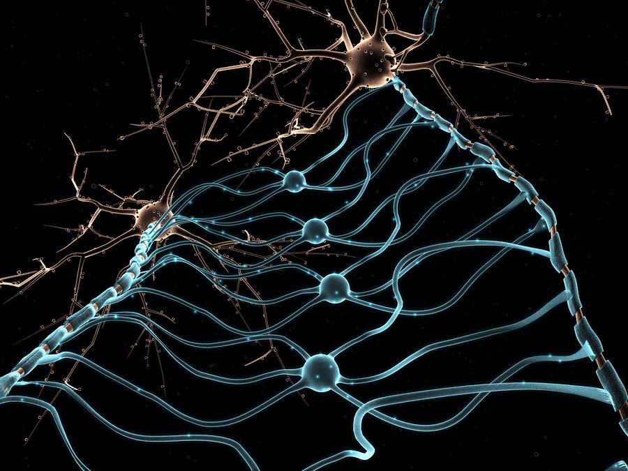 Neuroglia degli oligodendrociti