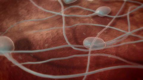 Struttura dello sperma