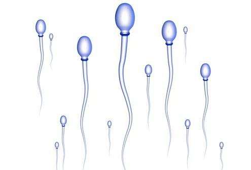 La struttura dello sperma