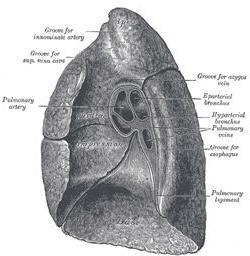 struktura ljudskog dišnog sustava