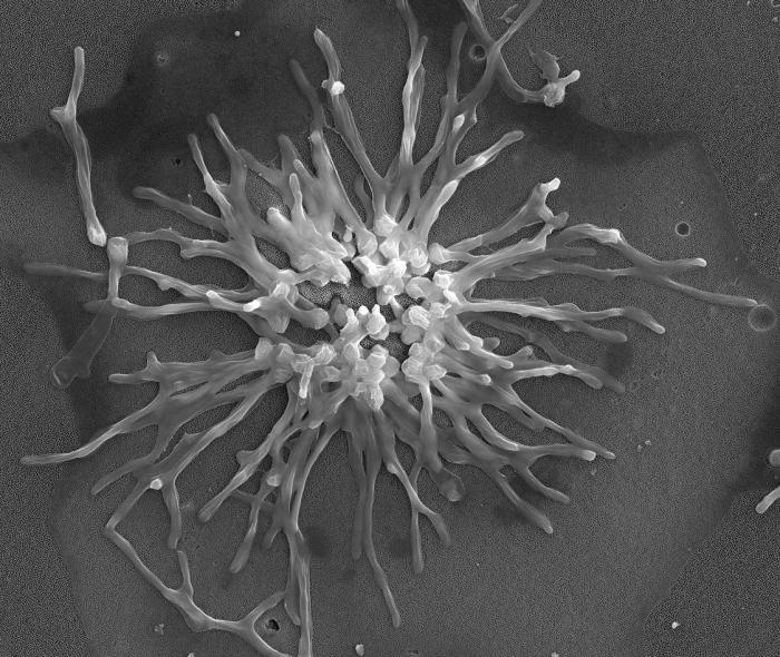 sintomi di infezione fungina