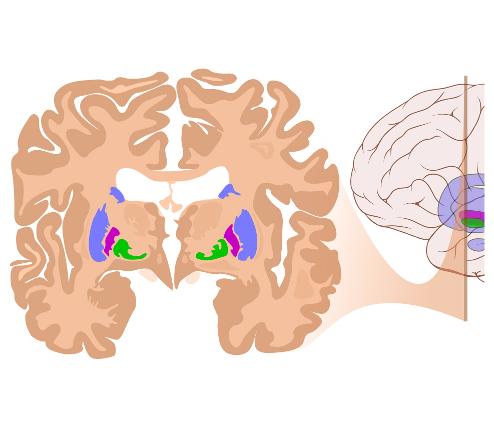 Čelní část mozku