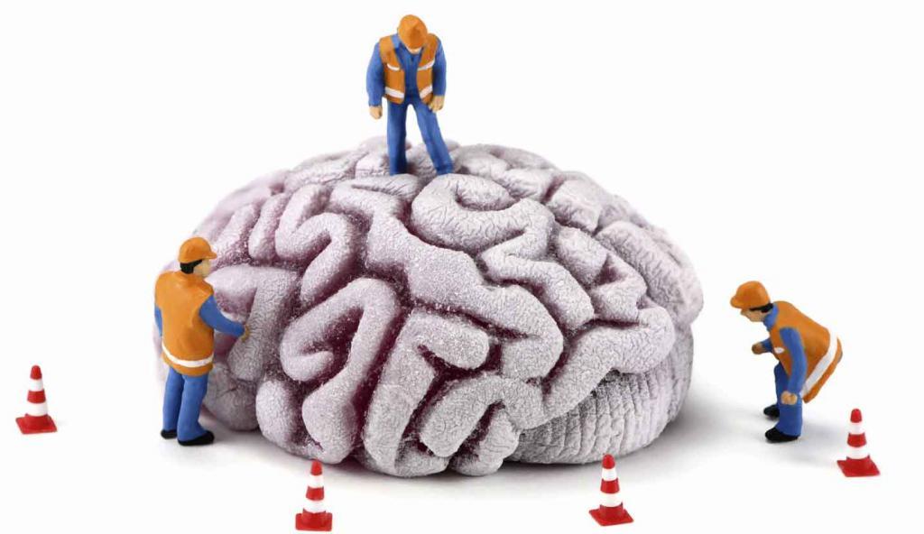 cerebrální hemisféry