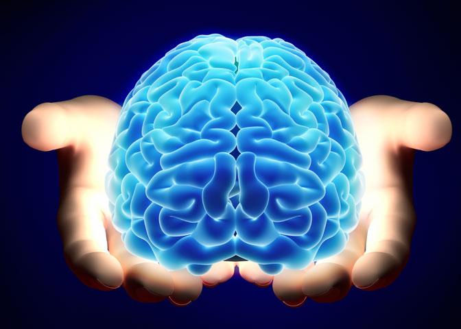 anatomie lidského mozku