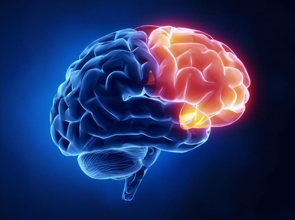 čelní lalok mozku