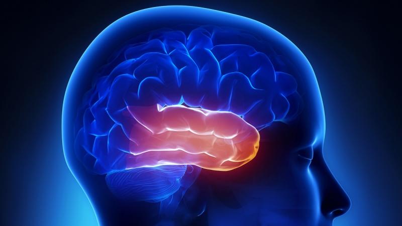 časový lalok mozku