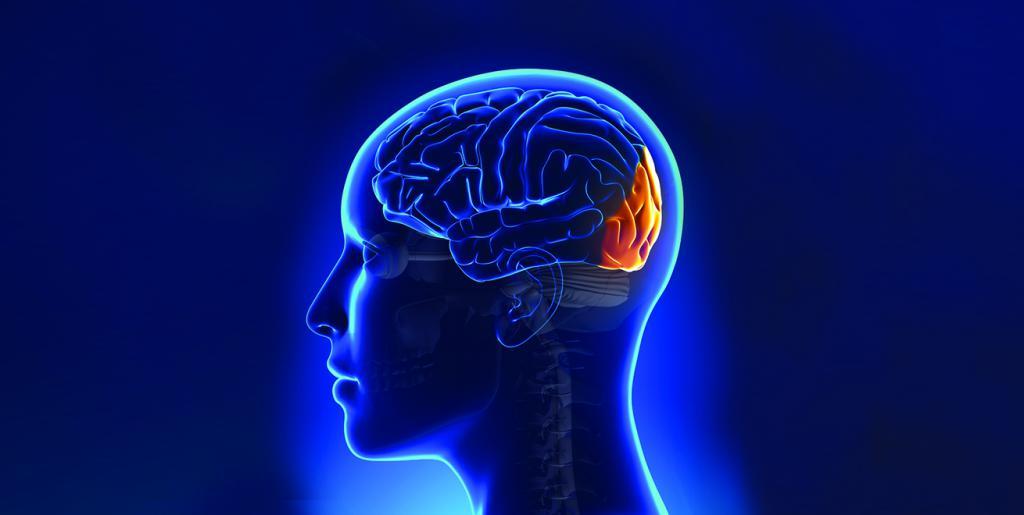 okcipitální lalok mozku