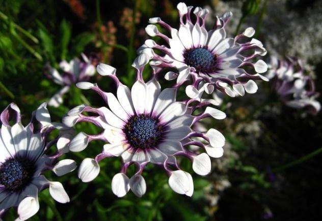 ogrlice od cvijeta od tikvica