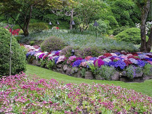 večletne vrtne rože