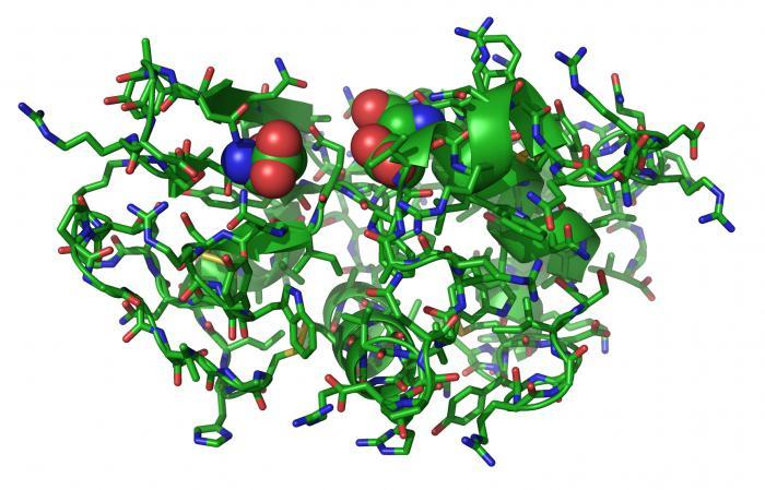 syntézy proteinů