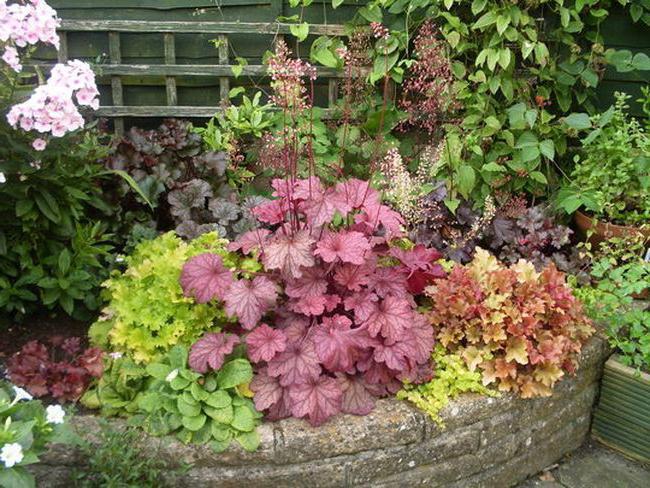 Sadnja i vrtlarstvo
