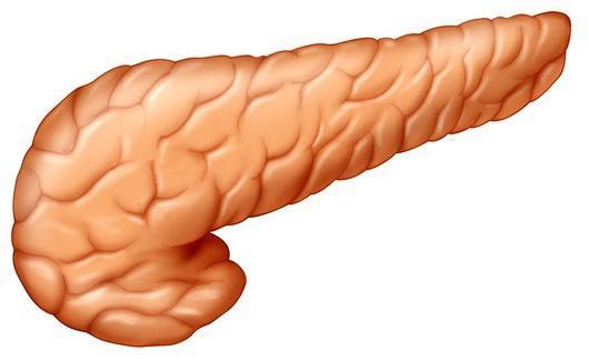 Secrezione esterna del pancreas