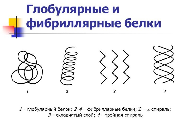 Proteine globulari e fibrillari