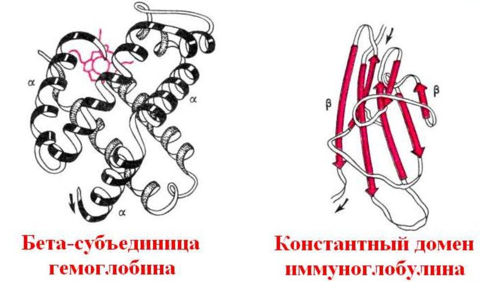 Struttura proteica