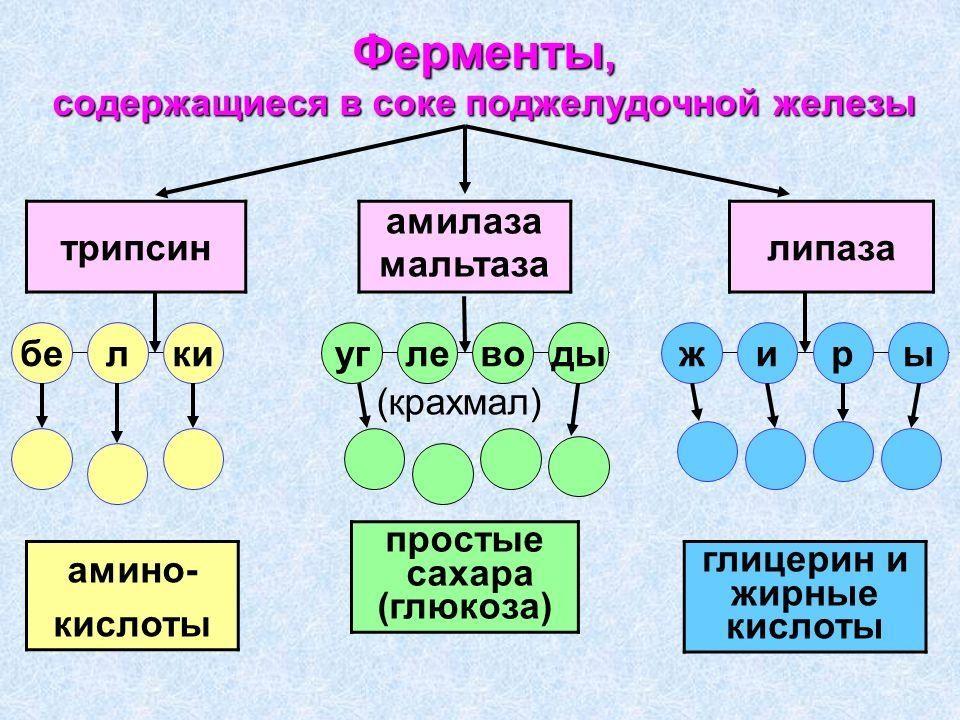 Enzimi pancreatici