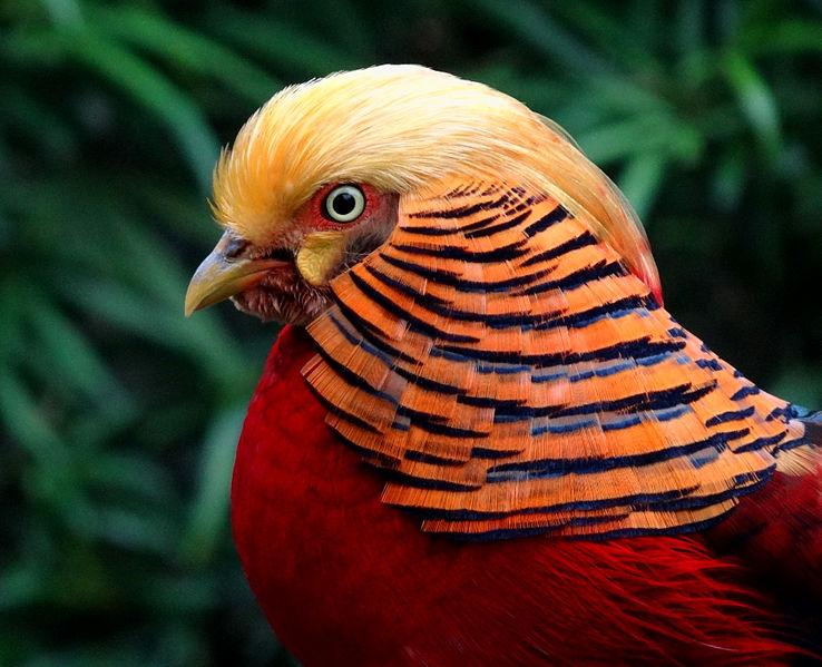 Il colletto colorato del maschio